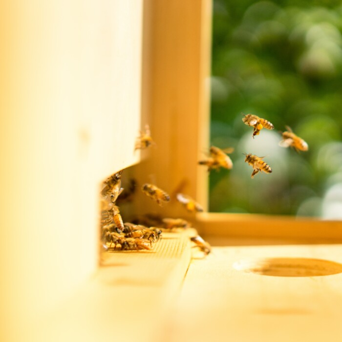 Découvrez nos ruches !
